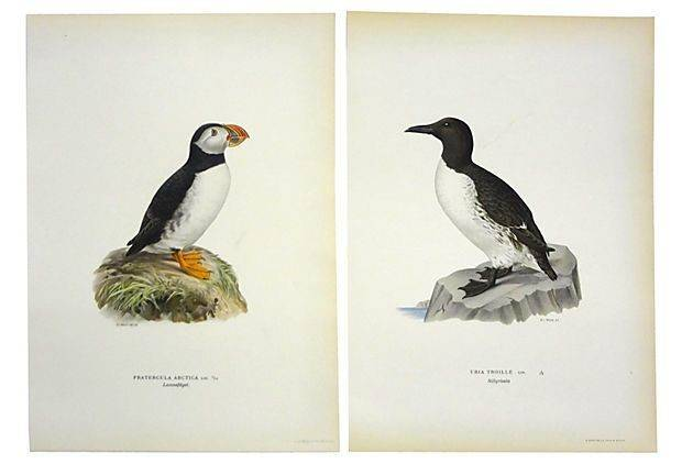 Swedish Bird Prints Pair Onekingslane