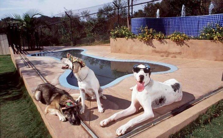 Swimming Pools Dogs Dog Bone Shaped Pool