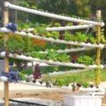 System Plants Diy Gardening Ideas Growing Hydroponic