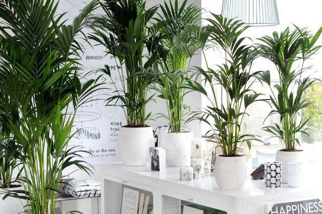 Than Plants Using Tropical Indoors Creates Your Own