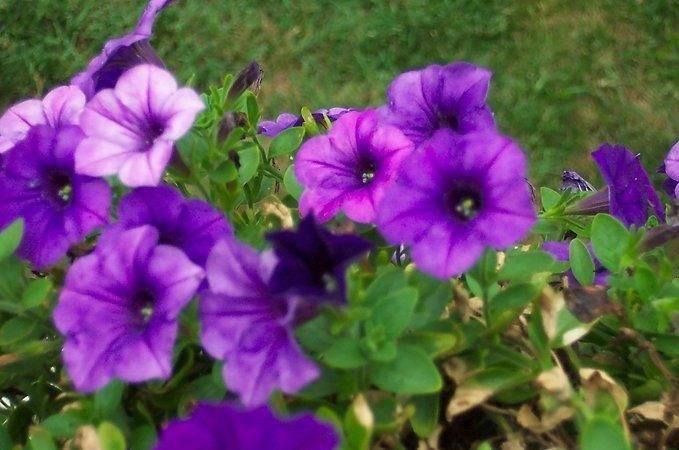 Thread Your Favourite Type Purple Flower