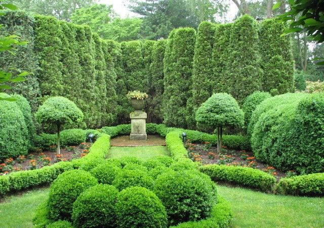 Thuja Arborvitae Fir Topiaries Boxwood Parterres Landscape