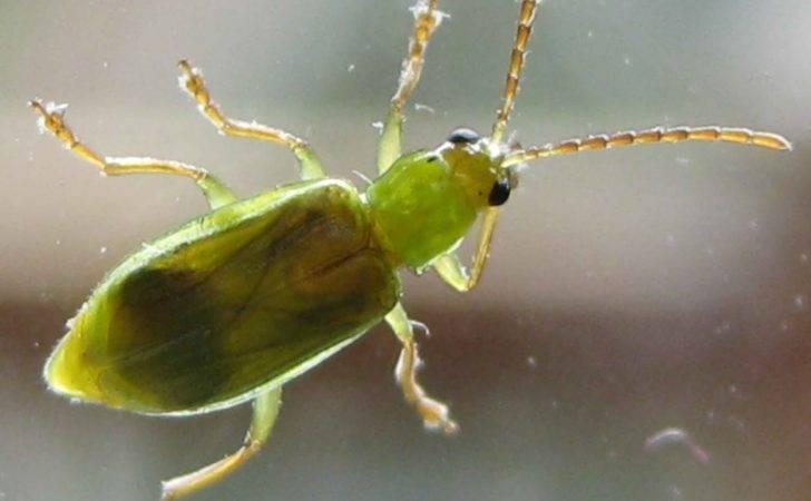 Tiny Green Bugs Etc December