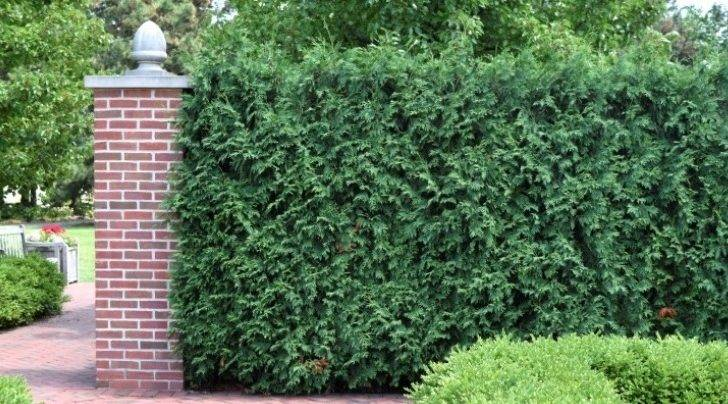 Top Five Plants Quick Privacy Screen