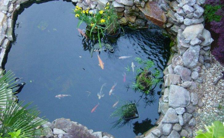 Top Pond Spring Can Our Various Koi