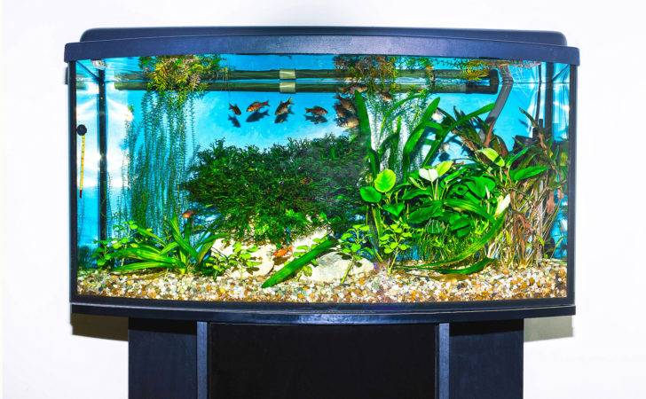 Top Ten Gallon Fish Tanks Your Home Office