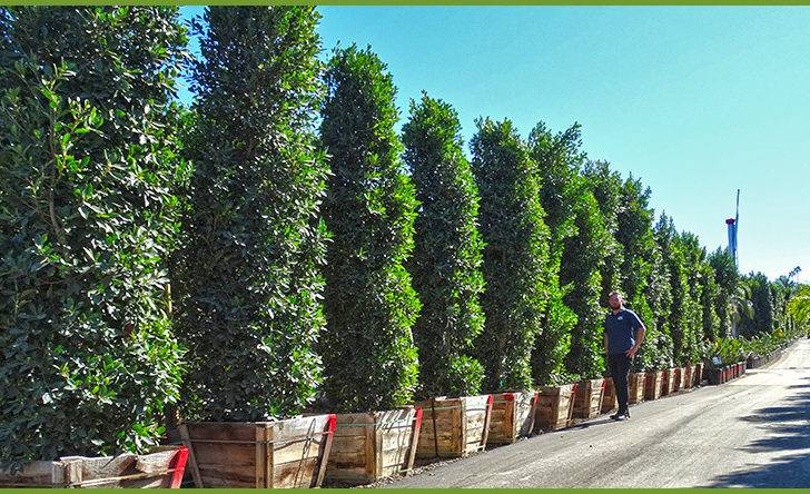 Top Trees Shrubs Privacy Hedge