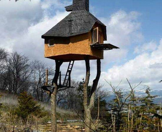 Tree House Well More Stilts Using