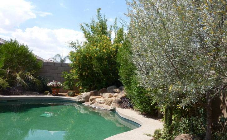 Trees Around Pool Type Recommendations Distance