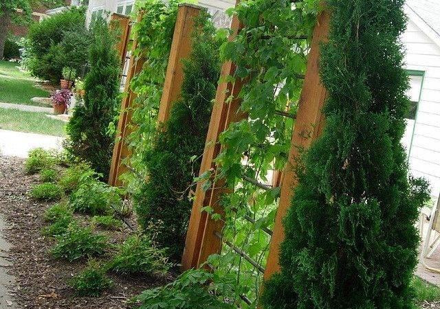 Trellis Garden Privacy Fences Fence