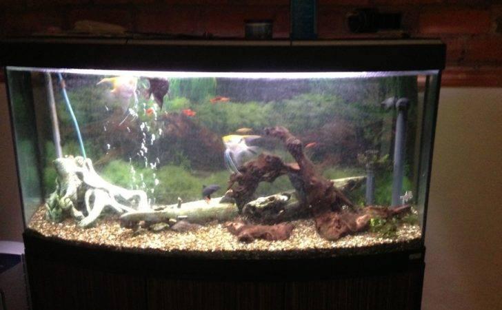 Tropical Fish Aquarium Leominster Herefordshire Pets Homes
