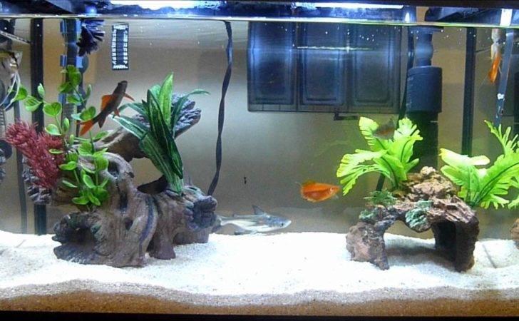 Tropical Fish Aquarium Youtube