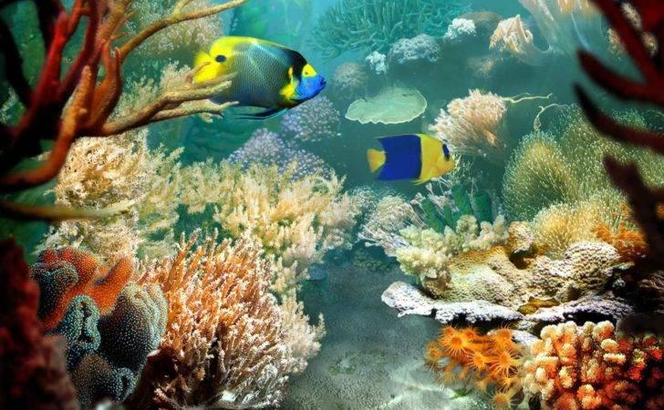 Tropical Fish Screensaver Pic