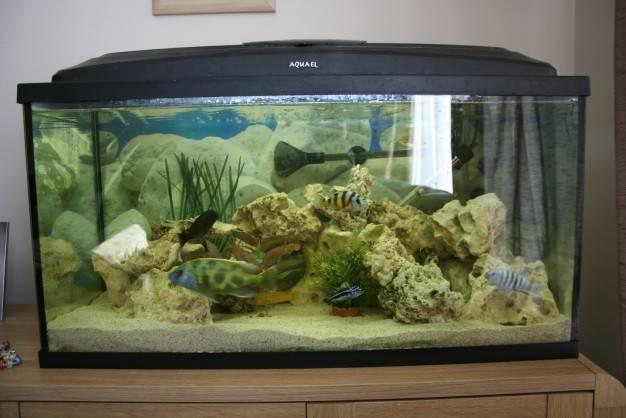 Tropical Fish Tank Set Sale Ovno Aquarist Classifieds