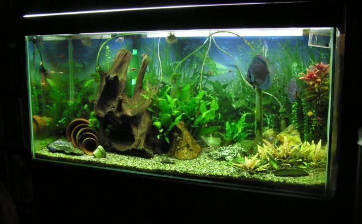 Tropical Fish Tank Stark