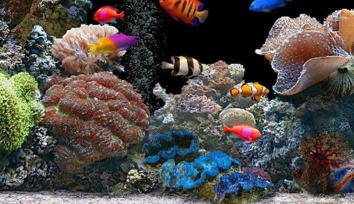 Tropical Fish Tanks Aquatic Supplies