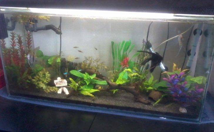 Tropical Fish Tanks Caudata Newt Salamander Forum