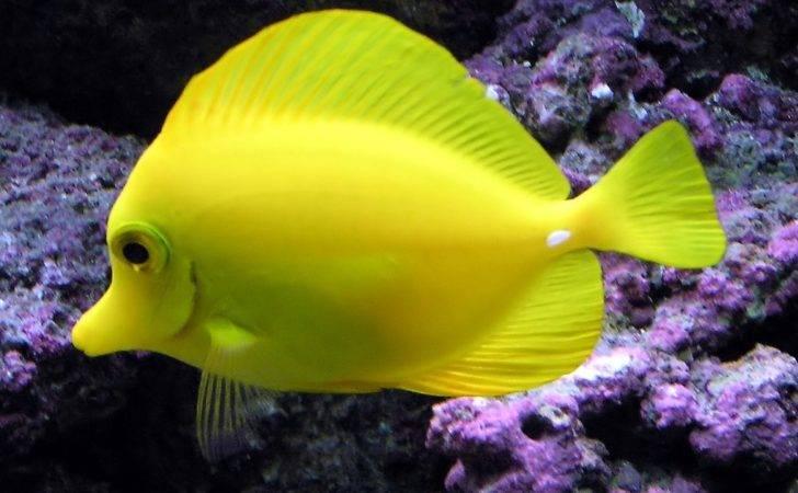 Tropical Freshwater Aquarium Fish Just Sharing