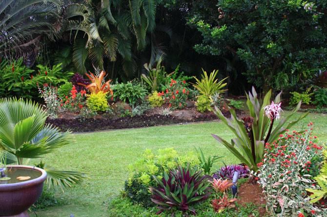 Tropical Garden Design Plants Thorplc
