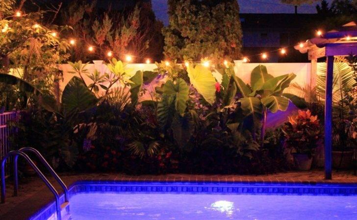 Tropical Gardening New York City Night Pics Around Pool Area