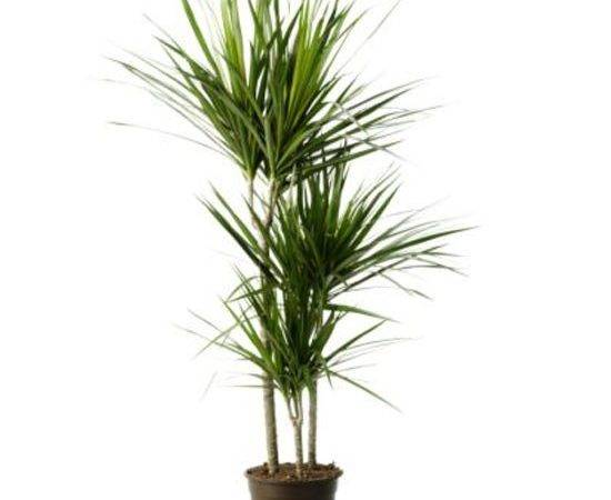 Tropical House Plants Identification Search Results