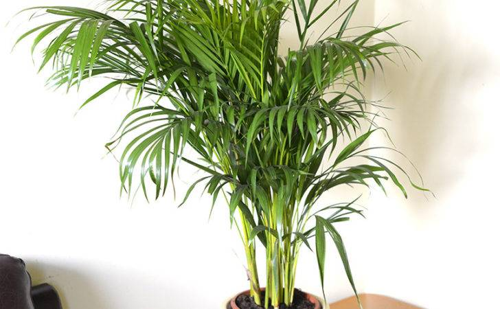 Tropical Indoor Plants Palm Tree Likewise House