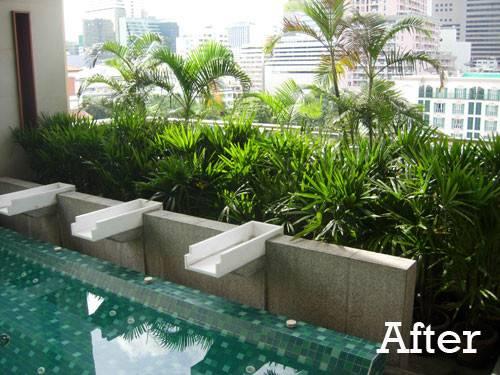 Tropical Planting Indoor Pool Garden Bangkok Thai Design