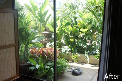 Tropical Plants Balcony Thailand Ideas Pinterest Gardens