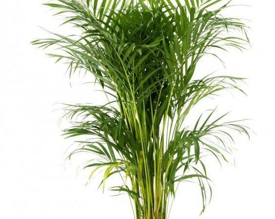 Tropical Plants Great Dressing Your Home Large