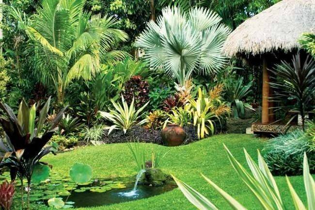 Tropical Plants Provides Year Round Colour Easy Maintain