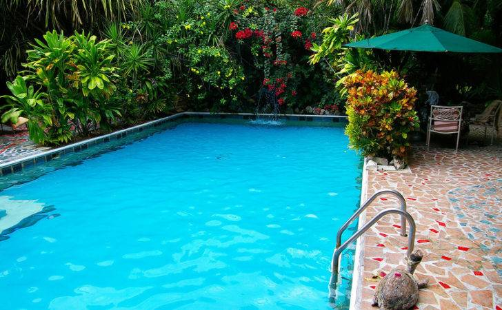 Tropical Pool Designs Creating Paradise Your Backyard