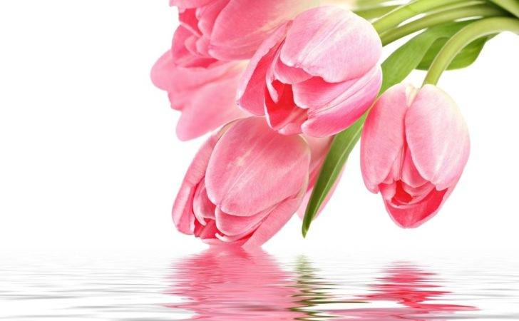 Tulips Floral Design Studio Reviews Ratings Wedding Flowers