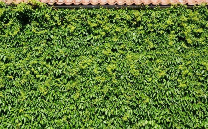 Twining Plant Wall