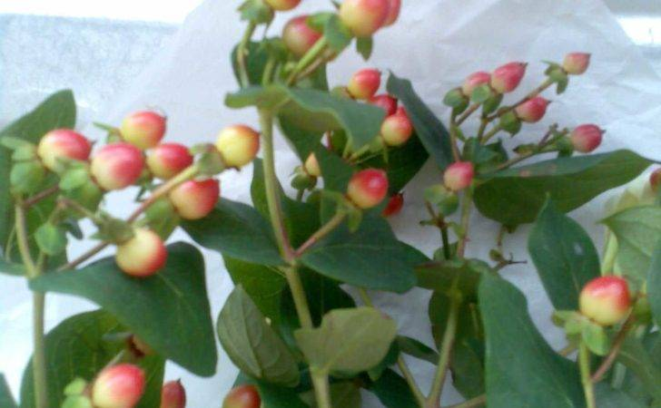 Type Berries Can Flower Arrangement