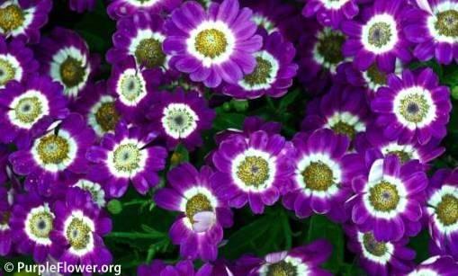 Types Purple Flower Flowers Complete