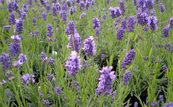 Types Purple Flower Galleryhip Hippest Pics