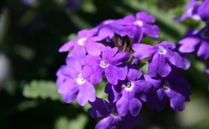Types Purple Flower Uncategorized Darren Weblog