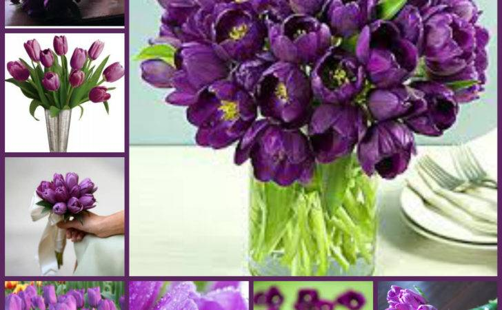 Types Purple Flowers Related Keywords Suggestions