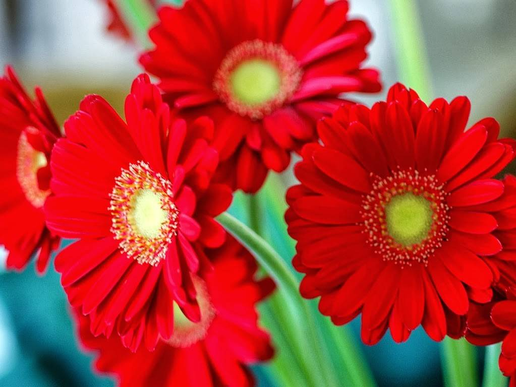 Types Red Flowers
