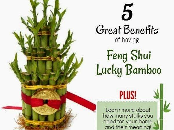 Unique Feng Shui Blog Meaning Behind Lucky Bamboo