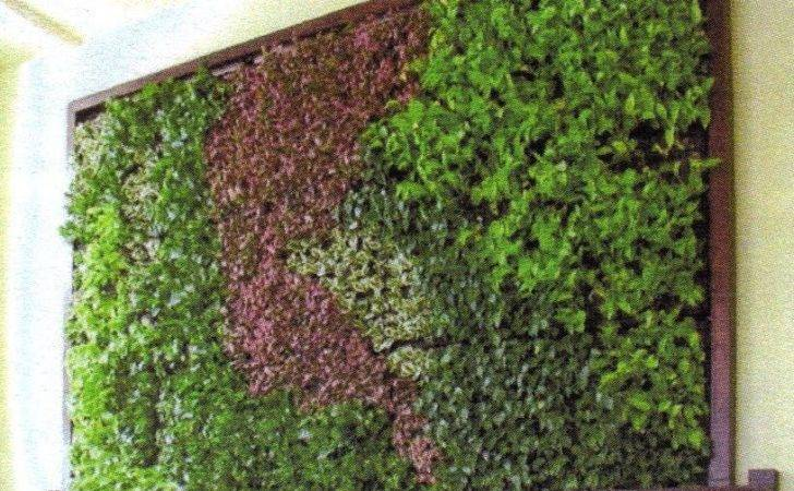 Upon One Sees Wall Greenery Alive Rich Color