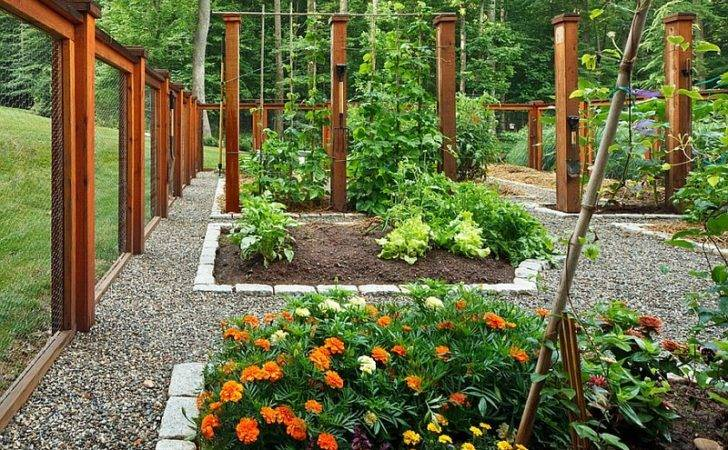 Vegetable Flower Garden Plants Drought Tolerant