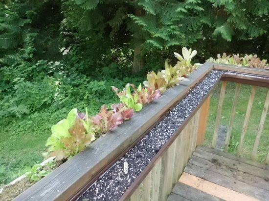 Vertical Diy Rain Gutter Garden Ideas Small Spaces