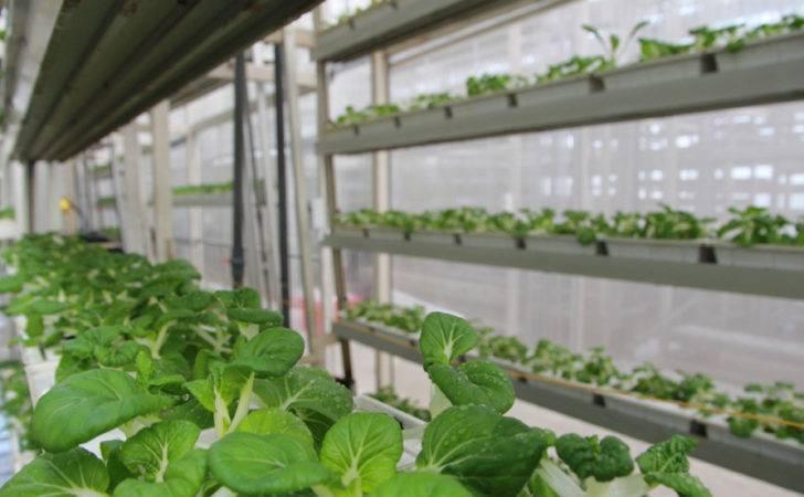 Vertical Farms Were Conceptualized But Singapore Sky