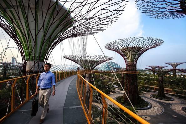 Vertical Garden Singapore Supertrees