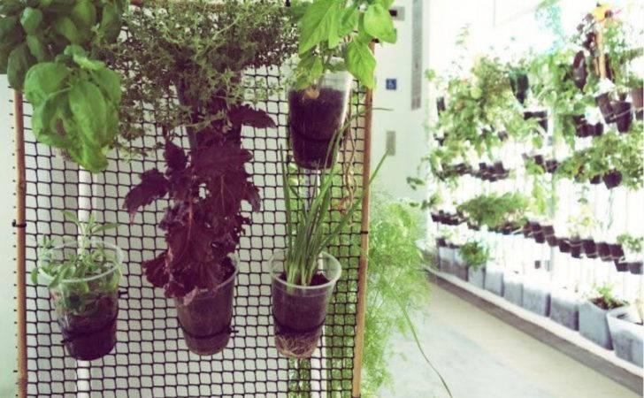 Vertical Gardening Hdbs Overcoming Challenge Space