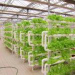 Vertical Gardening Hydroponic Grow System Hydroponics Tubes Buy