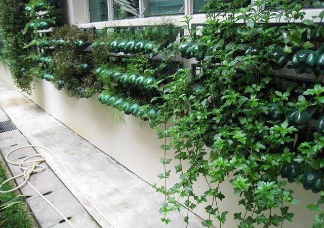 Vertical Gardening Recyclables Dream Grow