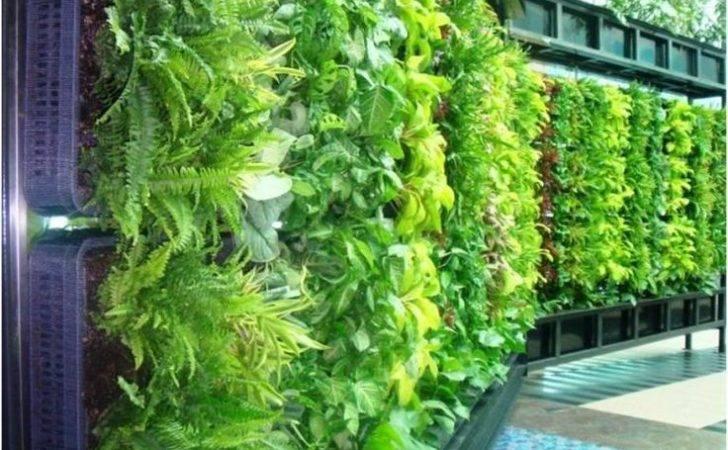 Vertical Gardens Ideas Garden Diy Wall