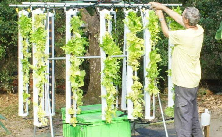 Vertical Hydroponic Grow Systems Over Tradition
